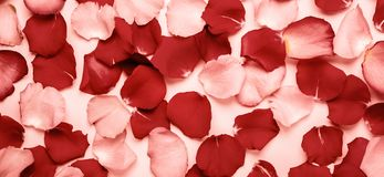 Romantic or spa background of red and pink rose petals. Tinted, Banner format.  stock photo