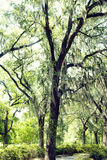 Romantic Spanish Moss Royalty Free Stock Photography