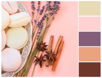 Romantic spring color palette. Colour swatch. Pink, brown, purple and olive colours stock photography