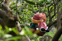 Romantic story in citrus orchard. Two rag babies are sitting in the citrus orchard just like lover royalty free stock images