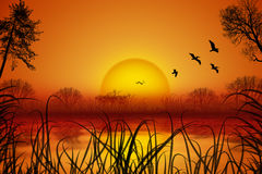 Romantic summer landscape with sunset over water, birds, reed, trees Royalty Free Stock Photography