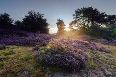Romantic sunrise in a Dutch nature moorland Stock Photos