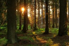 Romantic sunset in a forest in the Harz mountains, a low mountain range in Germany. royalty free stock photography
