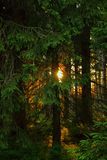 Romantic sunset in a forest in the Harz mountains, a low mountain range in Germany. stock photo