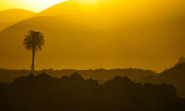 Romantic sunset with palm tree Royalty Free Stock Images