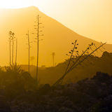 Romantic sunset with standalone trees in volcanic area Royalty Free Stock Photography