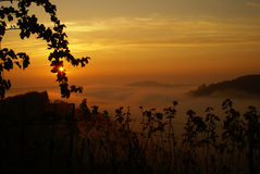 Romantic sunset in styrian vineyards Royalty Free Stock Images