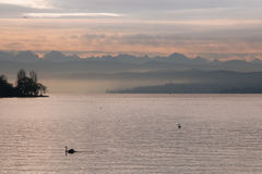 Romantic sunset on Zurich lake. Silhouette of swan and alps Royalty Free Stock Photography