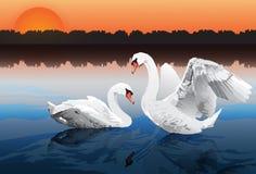 Romantic swan couple stock illustration