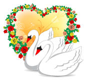Romantic swans Stock Photos