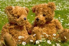 Romantic teddybear couple. Closeup of a teddy couple in grass Royalty Free Stock Photos