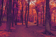 Romantic trail in foggy forest Royalty Free Stock Images