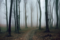 Romantic trail in foggy forest. Dark scary forest like a fairy tale Stock Photos