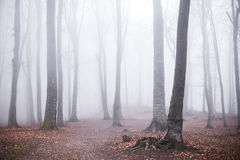 Romantic trail in foggy forest. Dark scary forest like a fairy tale Stock Photo