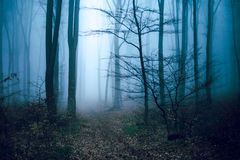 Romantic trail in foggy forest Stock Photos