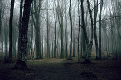 Romantic trail in foggy forest. Dark scary forest like a fairy tale Royalty Free Stock Photography