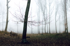 Romantic trail in foggy forest. Dark scary forest like a fairy tale Royalty Free Stock Photo