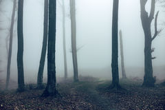 Romantic trail in foggy forest Royalty Free Stock Photo