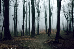 Romantic trail in foggy forest Stock Photo