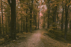 Romantic trail in misty forest. Dark scary forest like a fairy tale Royalty Free Stock Photo