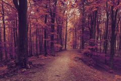 Romantic trail in misty forest. Dark scary forest like a fairy tale Royalty Free Stock Photos