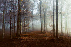 Romantic trail in misty forest. Gloomy dark autumn day. Filtered image Royalty Free Stock Photography