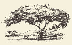 Romantic tree with bench drawn sketch Stock Image