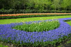 Romantic Tulip garden Stock Image