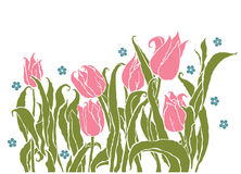 Romantic tulips Royalty Free Stock Photo
