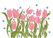 Romantic tulips Royalty Free Stock Images