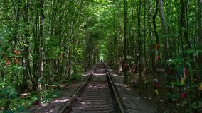 The romantic Tunel of Love. The walk along the Tunnel of Love, the part of the railway with unique arched shape of trees and bushes around it, created by trains stock video footage