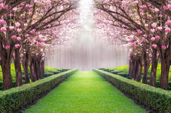Romantic tunnel. The romantic tunnel of pink flower tree, Pink trumpet tree royalty free stock photos