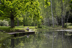 Romantic view of the pond in the summer. Romantic view of the green pond in the summer in Sigulda, Latvia Royalty Free Stock Images