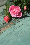 Romantic vintage roses background Stock Images