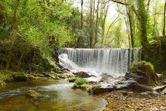 Romantic waterfall in a lost forest. royalty free stock photos