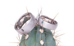 Romantic wedding ring on Cactus. And white background royalty free stock images