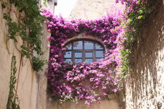the window covered with bougainvilleas Royalty Free Stock Images