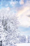 Romantic winter. A romantic winter landscape with a groups of trees and cloudy sky Royalty Free Stock Image