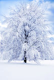 Romantic winter. A romantic winter landscape with snow and a huge tree over blue sky Stock Photos