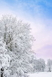 Romantic winter. A romantic winter landscape with snow and a group tree over blue sky Royalty Free Stock Photography