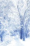 Romantic winter. A winter landscape - alley with tree covered with snow Royalty Free Stock Photography