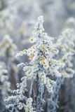 Romantic winter scene, plant frozen in ice crystal, nature backg Royalty Free Stock Photography