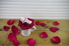 Romantic winter season photography image with marshmallows shaped as sleeping snowman with smiles iced on lying in red rose petals Royalty Free Stock Photo