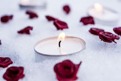 Romantic Winter Tealights On Snow Surrounded By Rose Bloom Royalty Free Stock Photography