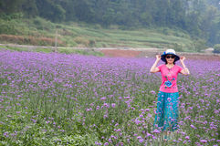 Romantic woman in lavender fields Stock Photos