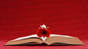 Romantic Writing. Hardcover Book Open With Rose Inside Royalty Free Stock Photo