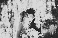 Romantiker saga, lyckligt nygift personpar som kramar och kysser i en parkera, träd i bakgrund royaltyfri bild