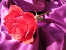 romantiker steg Fotografering för Bildbyråer