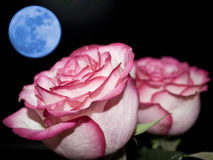 Romantique Photos libres de droits