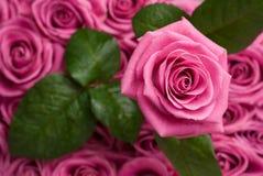 Romantique s'est levé. photo stock